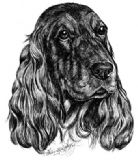 Cocker Spaniel Personalised Greetings Card